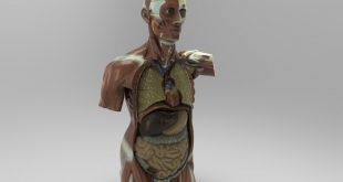Threeding Unveils Accurate and Affordable Anatomical 3D Models for Education