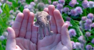 3D Scanning Pioneers Dacuda Sell Off 3D Division to Magic Leap